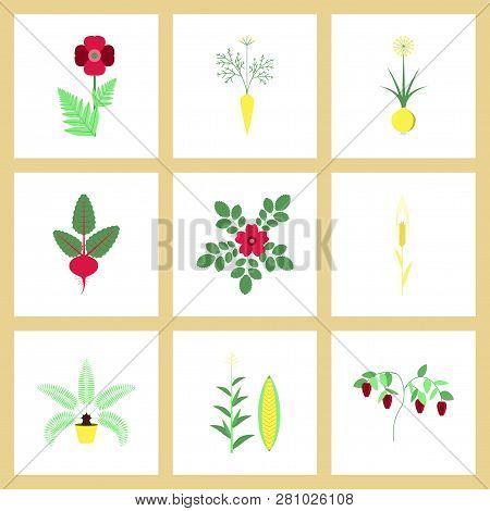 Assembly Flat Illustrations Flower Papaver Daucus Carota Allium Beta Rosa Majalis Phoenix Zea Mays P