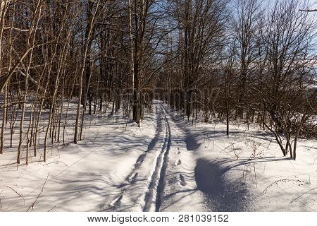 Road In Winter Forest. Sunset In Fir Forest. Winter Landscape
