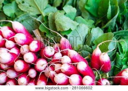 Freshly Harvest Red Purple Colourful Radish.growing Radish Vegetable Background.fresh Red Organic Ra