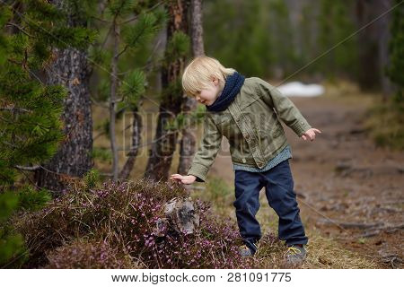 ?ute Little Boy Examines A Heather Bush In The Swiss National Park In The Spring. Active Family Time