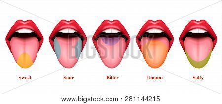 Tongue Taste Areas Realistic Vector Illustration With Five Basic Sections Of Gustation Exactly Sweet