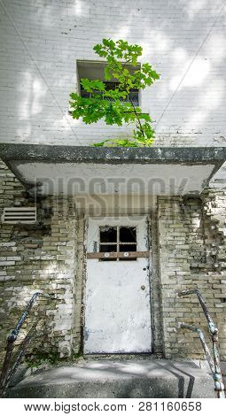 Determination. Tree Grows On The Cement Roof Of An Abandoned Building In Vertical Orientation.