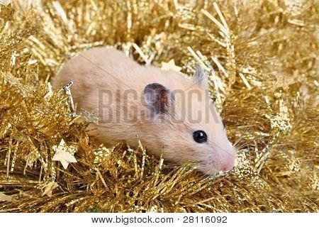 Little hamster in the golden tinsel