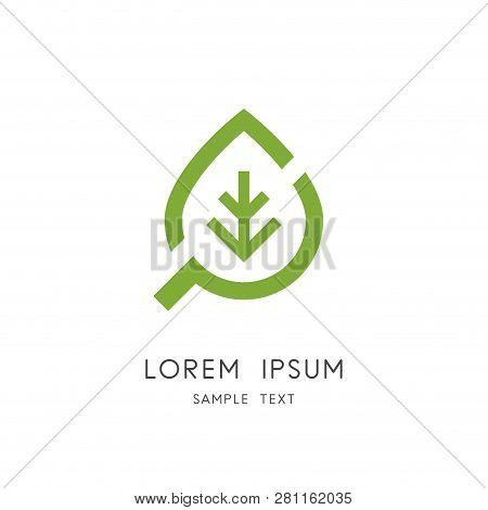 Leaf And Search Logo - Plant And Loupe Or Magnifier Symbol. Herbal Medicine And Phytotherapy, Natura