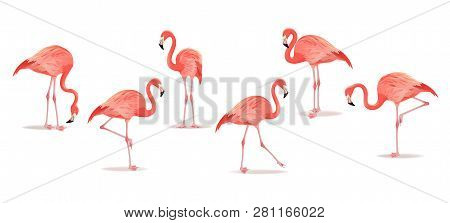 Set Of Exotic Flamingos Isolated On White Background. Flamingo Isolated On White. Pink Flamingo Vect
