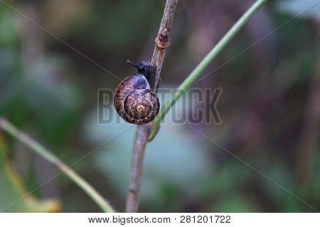 Snail crawling branch Selective focus Challenge concept Goal achievement Effort persistence poster