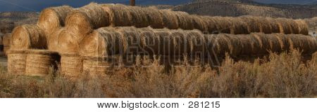 Long Hay Bales In Winter Golden Color