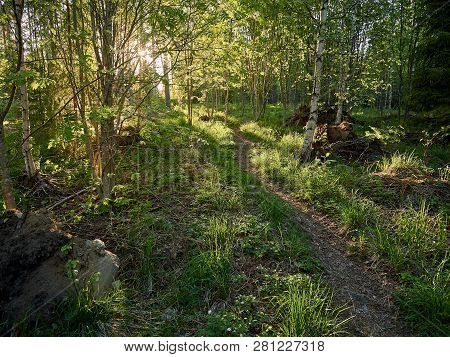 Green Natural Finnish Forest Illuminated By Sunbeams Through The Trees. The Concept Of Ecology And N