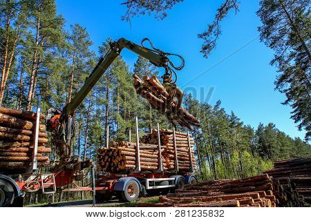 Crane In Forest Loading Logs In The Truck. Timber Harvesting And Transportation In Forest. Transport