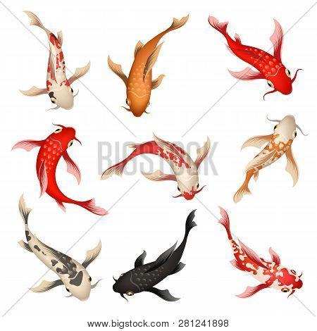 Koi Fish. Nishikigoi Or Brocaded Carp Set, Swimming Asian Japanese Colored Fishes Isolated On Backgr