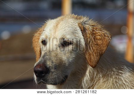 Small cute dog looking far away awaiting his master or his friend in a green grass field. Close up portrait of a dog. poster