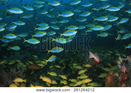 Tuna and sardines fish underwater in ocean