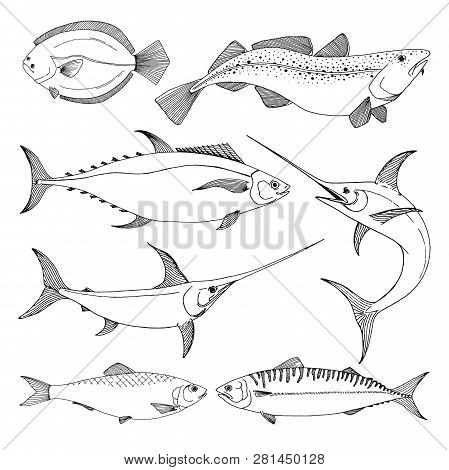 Set Of Different Sea Fishes. Vector Illustration In Sketch Style.