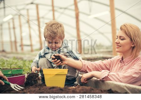 Little Boy With Mother. Mother And Little Boy Working In Modern Greenhouse Garden. Mother And Little