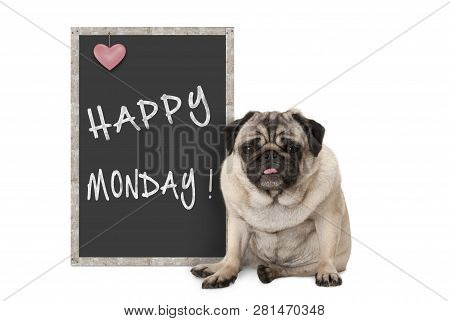 Cute Grumpy Pug Puppy Dog With Bad Monday Morning Mood, Sitting Next To Blackboard Sign With Text Ha