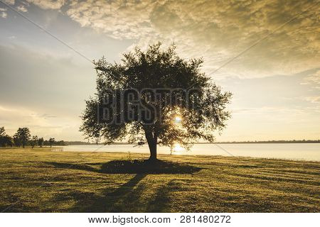 Alone Tree Silhouette On Riverside Lake With Sunset Or Sunrise On Green Meadow In Countryside Landsc