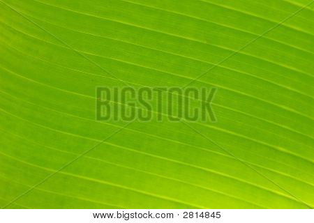 Structure of fresh green leaf of a plant with proveins poster