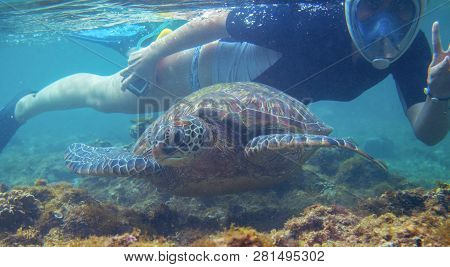 Snorkeling Woman And Sea Turtle. Tourist Activity Snorkeling With Turtles. Marine Tortoise Underwate