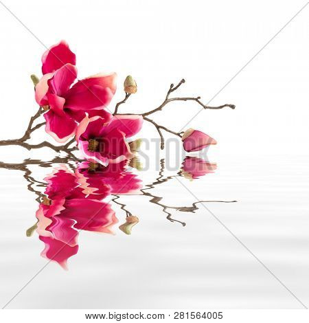 An image of some red magnolia flowers water reflections