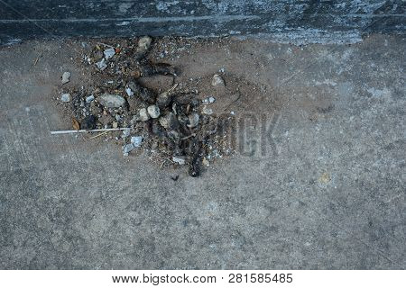 Feces Of Dog With Sand On Cement Ground