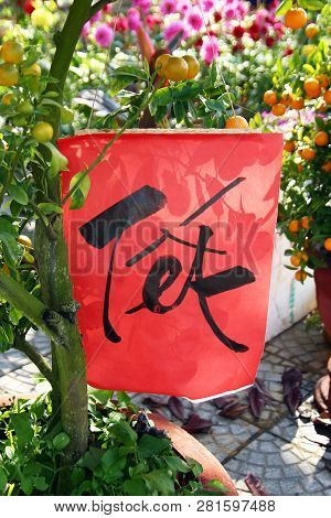 Red Paper With Inscription Tet (translated - New Year) On A Tangerine Tree For Celebration Of Vietna