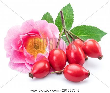 Rose-hips with rose hip flower isolated on a white background.