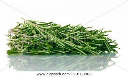 fresh green rosemary isolated on white
