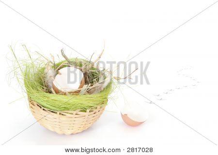 Empty Egg Shell In Wicker Basket
