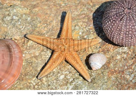 Sea Life. Starfish, Sea Urchin, Sea Shell, Clam Shell. Close Up View. Greece. Orange Starfish, Viole