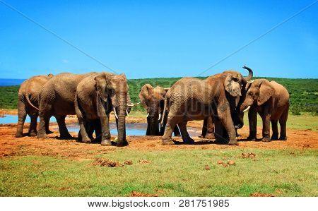 Elephants At Watering Hole. African Wildlife. Elephant Love. Amazing Image. Travel To Africa. Africa