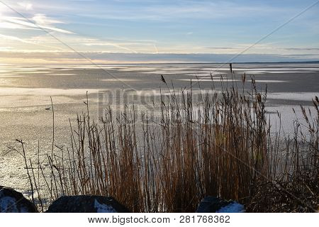 Backlit Reeds By An Icy Coast With Snow Patterns On The Ice