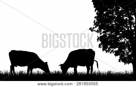 Realistic Illustration With Two Silhouette Of Cow On Pasture, Grass And Tree, Isolated On White Back