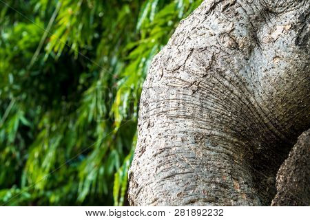 Texrture Surface Of Large Trees On Leaves Background