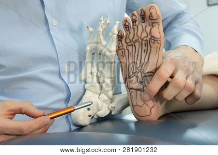 anatomy lesson -presentation of human foot with drawing of bones on the skin, and model of foot - comparison