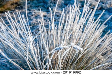 Closeup Of Bulrush Covered With Hoarfrost. The Photo Was Taken On A Sunny Morning In The Dutch Natio