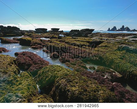 New Zealand Natural Beach In Southern Island, Natural Landscape Background