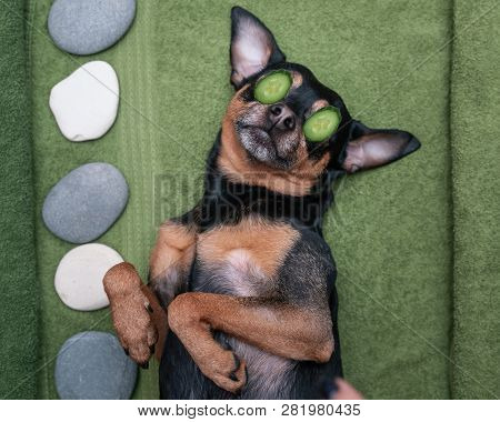 cute Pet Relaxing In Spa Wellness . Dog With A Slice Of Cucumbers On The Eyes.  Funny Concept Groom