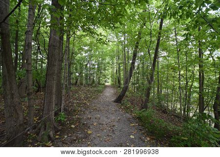 Hiking Path In Beautiful Woods View Inspirational Summer Landscape In Forest. Walking Footpath Or Bi