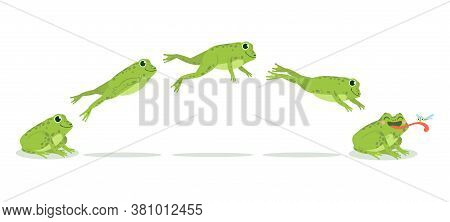 Frog Jump. Various Frog Jumping Animation Sequence, Jump Green Toad Keyframes, Funny Water Animals H