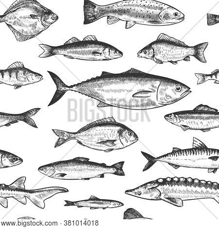 Fish Seamless Pattern. Hand Drawn Different Sea And River Fishes, Marine Underwater Life Monochrome
