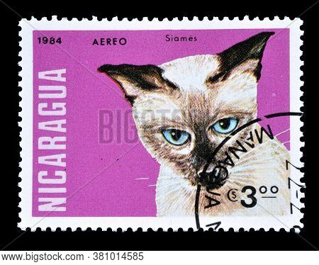 Nicaragua - Circa 1984 : Cancelled Postage Stamp Printed By Nicaragua, That Shows Siamese Cat, Circa