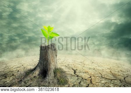 New Beginning And The Cycle Of Life Concept Of Hope And Recovery As A Sapling Plant Growing From A D