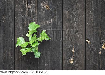 Walnut Wood. Old Floor Wooden Pattern. Timber Plank Surface Wall For Vintage Grunge Wallpaper. Dark
