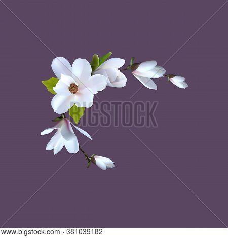 Premade Arrangement Magnolia Flowers. Realistic Magnolia For Gretting Card