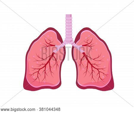 Human Lungs Icon. Lungs, Trachea, Bronchi And Bronchioles. Anatomy Vector Illustration On White Back