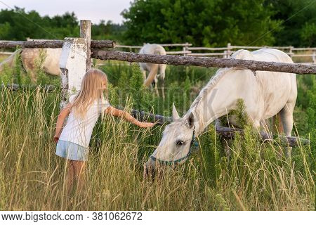 Cute Adorable Little Blond Caucasian Kid Girl Meet Beautiful White Horse Near Wooden Fence At Countr
