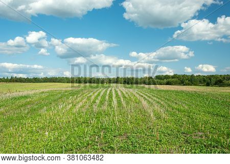 Arable Land, Forest And White Clouds On Blue Sky