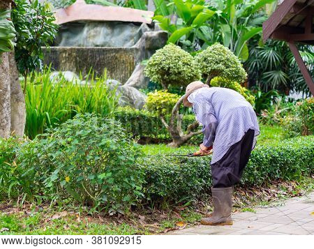 Gardener Is Trimming A Hedge. Cutting The Hedge With Garden Shears