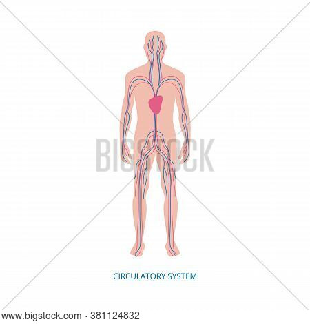 Human Blood Circulatory System Medical Infographic Vector Illustration Isolated.