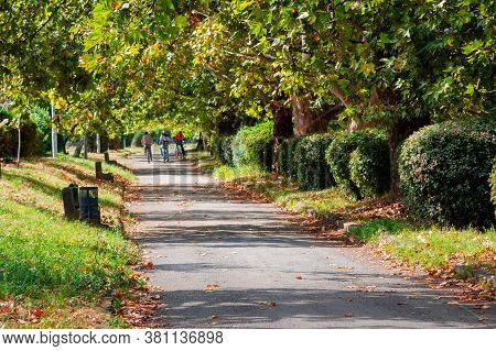 Park Alley In Early Autumn. Trees In Green Foliage. Sunny Weather